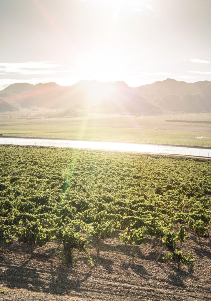 Vineyards and irrigation canal